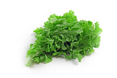 The green spinach. Isolated on white background Royalty Free Stock Photos