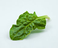 Green Spinach Leaves Stock Photography
