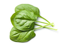 Green spinach leaves Royalty Free Stock Image