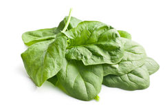 Green spinach leaves Stock Photos
