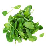 Green spinach Stock Photo