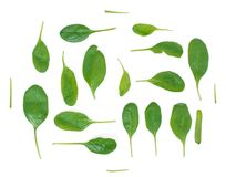 Green spinach Stock Photography