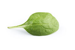Green spinach on a white background Stock Photo