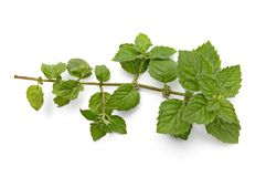 A green sprig of mint Stock Photo