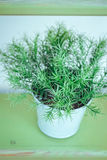 Green sprigs in the pot Royalty Free Stock Image