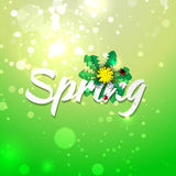 Green spring abstract background. Royalty Free Stock Photography