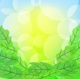Green spring background. With leafage and blurry light Royalty Free Stock Image