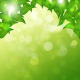 Green Spring Background Stock Photos