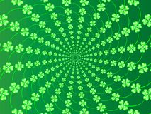 Green spring background with fresh leaves of clover to the day St Patrick Royalty Free Stock Photography