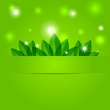 Green spring background with petals Stock Photo