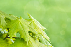 Green spring background with shallow focus Stock Photography
