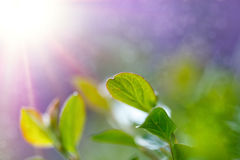 Green spring background Royalty Free Stock Images