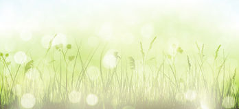 Green spring bokeh background with grass, sky and blurry light d Stock Images
