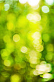 Green spring bokeh of blurred leafes Stock Photo