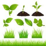 Green Spring Elements Set For Your Design
