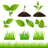 Green Spring Elements Set For Your. Vector. Set Of Green Leaves, Grasses And Sprouts Royalty Free Stock Photos