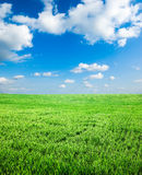 Green spring field Royalty Free Stock Photography