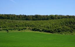 Green spring field Stock Photography