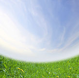 Green spring field background Stock Photos