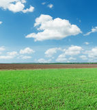 Green spring field and clouds in blue sky Royalty Free Stock Images