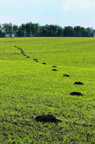 Green spring field damaged by mole stock images