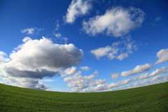 Green spring field Stock Image
