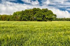 Green spring field landscape Stock Photo