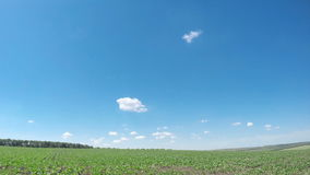 Green spring field and small clouds. stock video footage