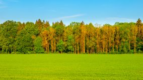 Green spring field on sunny day. Panoramic shot stock images