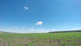 Green spring field. stock video