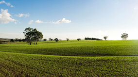 Green Spring Fields Stock Images