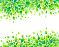 Green spring foliage vector frame on white background Royalty Free Stock Photography