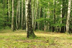 Green spring forest Royalty Free Stock Images