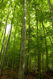 Green spring forest Stock Photography