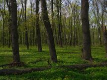 Green spring in the forest royalty free stock photos