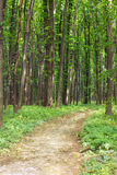 Green spring forest with footpath Royalty Free Stock Images