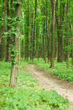 Green spring forest with footpath Royalty Free Stock Photos