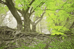 Green spring forest Stock Photos