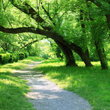 Green spring forest with small path Stock Photos