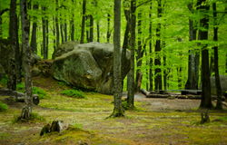 The green spring forest in western Ukraine. The green spring forest with beautiful rocks in western Ukraine Stock Image