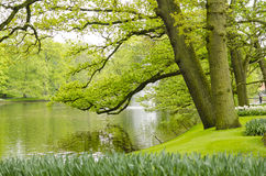 Green spring gardens in Keukenhof, Holland Stock Photo