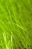 Green spring grass background Stock Photography