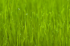 Green spring grass background Stock Images