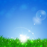 Green Spring Grass Background Royalty Free Stock Image
