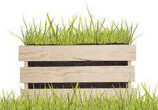 Green grass in wooden box. Green spring grass isolated on white background stock photos