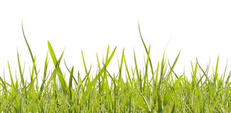 Green grass on white. Green spring grass isolated on white background stock photo
