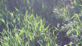 Green spring grass with sun flares video stock video footage