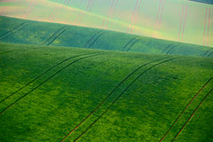 Green spring hills. Arable lands in Czech Moravia Royalty Free Stock Image