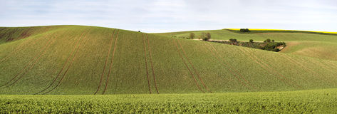 Green spring hills. Arable lands in Czech Moravia. April Royalty Free Stock Photography