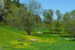 Green Spring Hillside Stock Photography